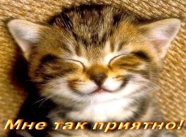 jonyit.ru